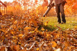 Leaf blower action blowing crispy color fall leaves into a pile